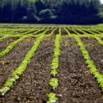 Ag balance sheet points to stable Canadian farm economy