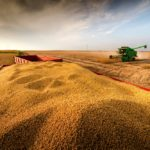 The U.S. government has implemented policies supportive of corn, but not of soybean prices.