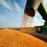 Corn harvest in the U.S. is mostly complete, but Ontario farmers continue to pick away at their corn when they can.