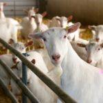 Who will inspect livestock welfare complaints?