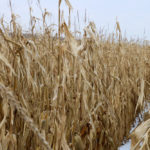 Farmers have been challenged by an inability to market lower-quality corn after last year's harvest.