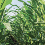 As corn yields rise, so does the need for more water.