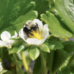 Bee-based disease prevention