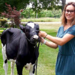 Meaghan Herrington and her 4-H calf.