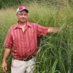Switchgrass breeding makes progress in Ontario