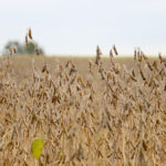 U.S. crop fundamentals change as harvest arrives