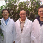 Artificial intelligence could create efficiency and reliability in greenhouses