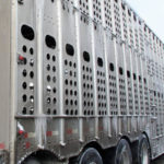 Improved trailers good for livestock welfare