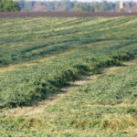 Moving more land into hay and pasture can make organic transition easier.