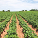 Potato fungicide restrictions will lead to more expensive application options.