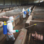 China announces step forward on African swine fever vaccine