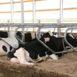 OPINION: Thoughts on dumping milk during COVID-19