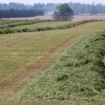 Hay acreage increasing in Ontario