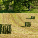 Hay market tight, but concerns with COVID-19-related demand
