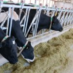 Dairy services gradually return to farms