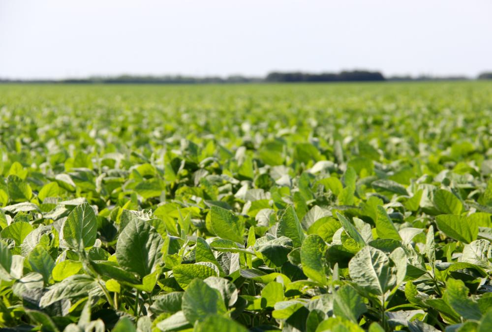 Drone program improves agronomic precision