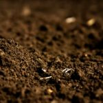 New soil test looks at microbial populations