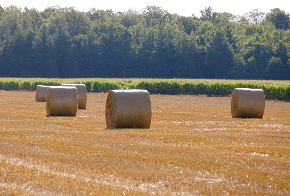 Many producers harvested straw in 2020 after strong prices in 2019.