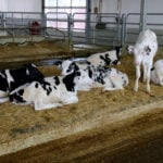 Dairy-specific tags central to DairyTrace implementation