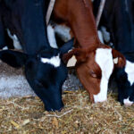 Tips to maximize profitability in dairy