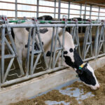 Forcing dairy data to tell useful stories
