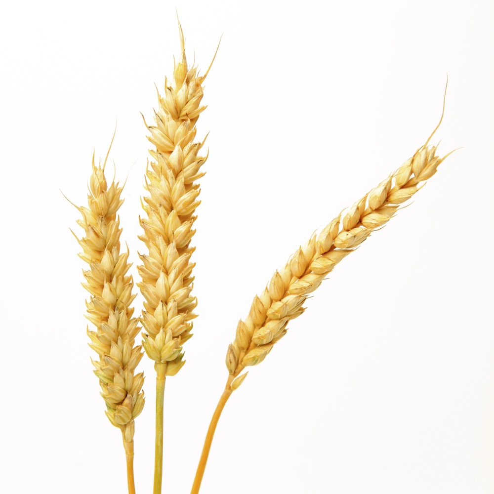 New plant growth regulator for cereal crops registered