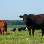 Measuring pasture growth can lead to more efficient management.