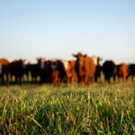 Beef Farmers of Ontario adopts anti-discrimination value statement