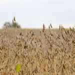 Soybeans, corn, wheat continue strong runs