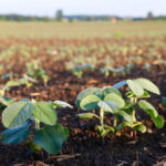 North American soybean planting expected to rise