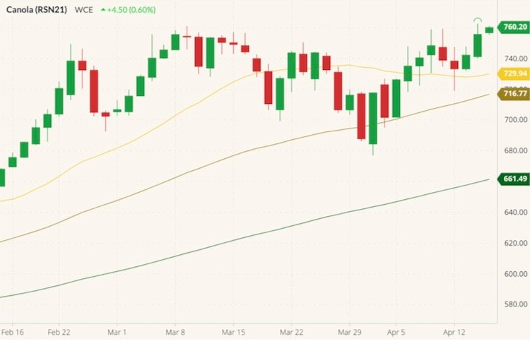 ICE July 2021 canola (candlesticks) with 20-, 50- and 100-day moving averages (yellow, dark yellow and green lines). (Barchart)